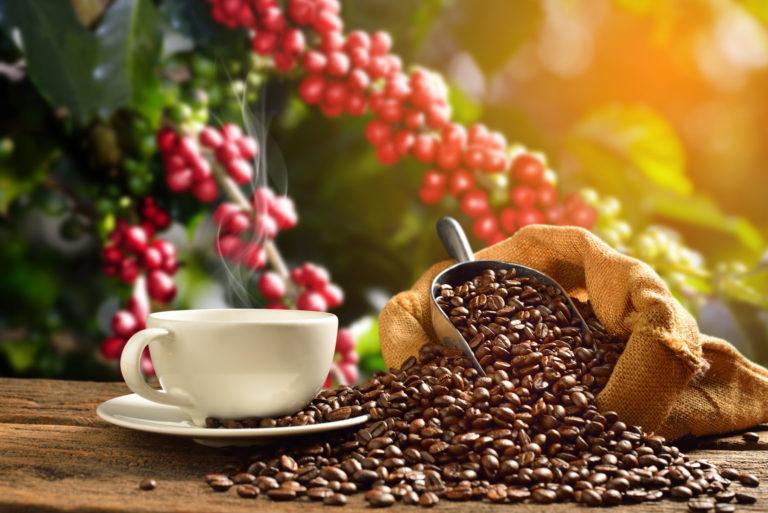rote Kaffeekirschen mit weisser Kaffeetasse und Kaffeesack mit Kaffeebohnen und Schaufel auf Holzbrett